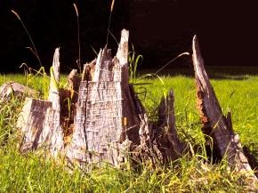 adles-tree